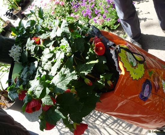 6 /23 Fleurs Jardins et Anaïs