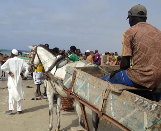 12 /25 - Nettoyage de la plage de Yoff (action)