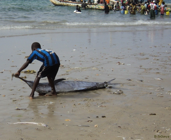 14 /25 - Nettoyage de la plage de Yoff (action)