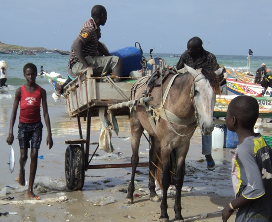 2 /25 - Nettoyage de la plage de Yoff (action)