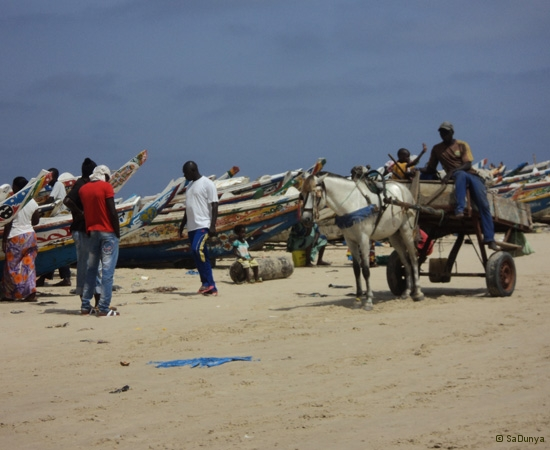 20 /25 - Nettoyage de la plage de Yoff (action)