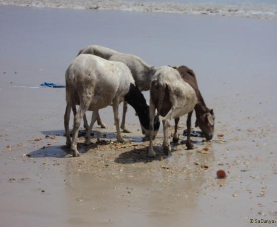 24 /25 - Nettoyage de la plage de Yoff (action)