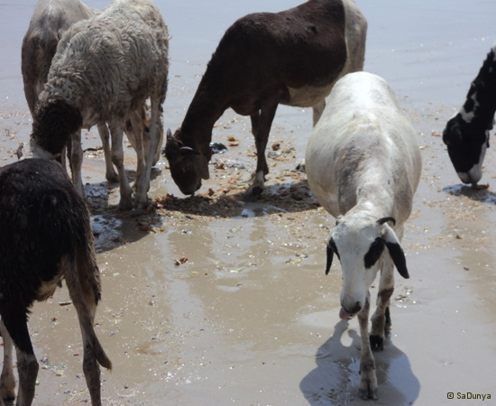 25 /25 - Nettoyage de la plage de Yoff (action)