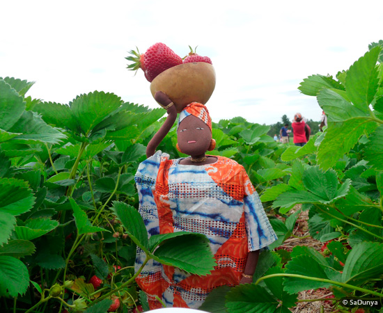 Fatoumata picking Strawberries at Fruition Berry Farm - 16/17