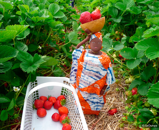 Fatoumata picking Strawberries at Fruition Berry Farm - 15/16