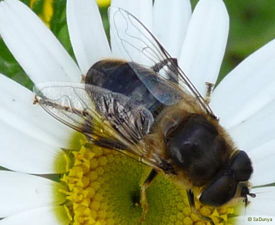 1 /21 - Le jardin et les abeilles de Terre & Humanisme