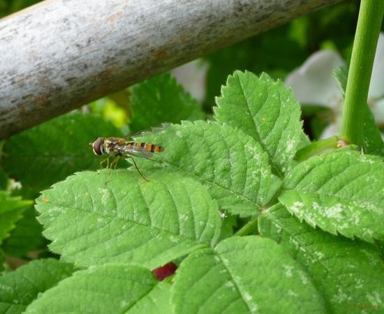 10 /21 - Le jardin et les abeilles de Terre & Humanisme
