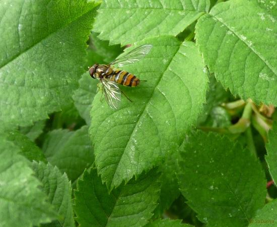 14 /21 - Le jardin et les abeilles de Terre & Humanisme