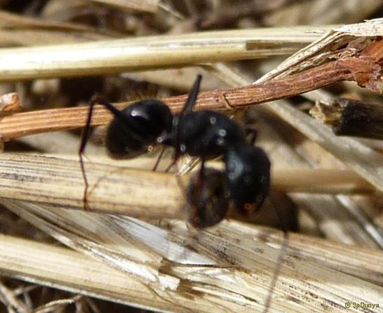 16 /21 - Le jardin et les abeilles de Terre & Humanisme