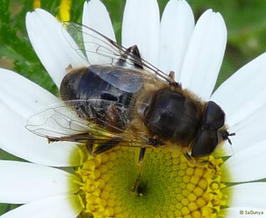 2 /21 - Le jardin et les abeilles de Terre & Humanisme