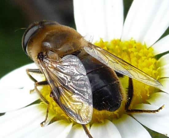 3 /21 - Le jardin et les abeilles de Terre & Humanisme