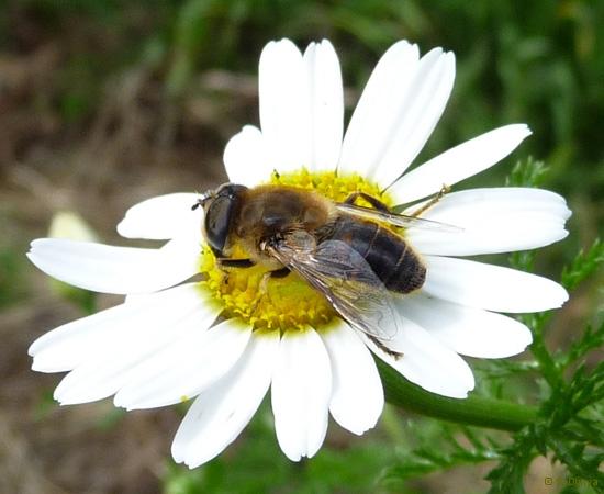 4 /21 - Le jardin et les abeilles de Terre & Humanisme
