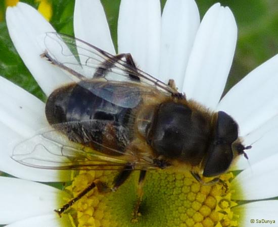 5 /21 - Le jardin et les abeilles de Terre & Humanisme