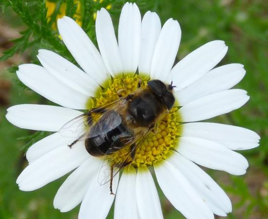 6 /21 - Le jardin et les abeilles de Terre & Humanisme