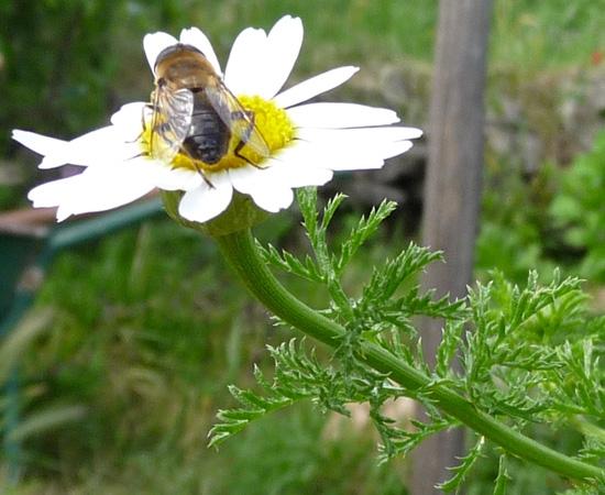7 /21 - Le jardin et les abeilles de Terre & Humanisme