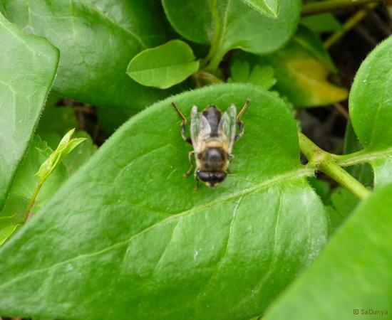 8 /21 - Le jardin et les abeilles de Terre & Humanisme