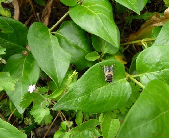 9 /21 - Le jardin et les abeilles de Terre & Humanisme