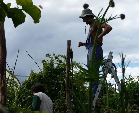 17 /23 - Le jardin potager de l\'association Terre & Humanisme