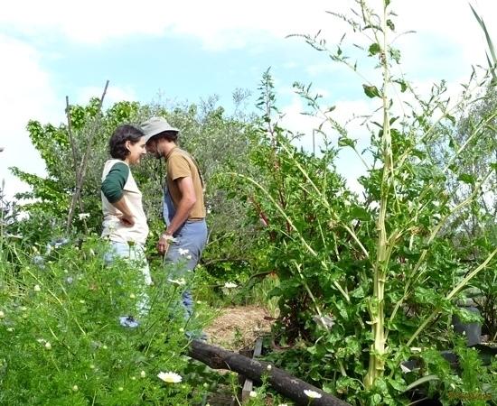 8 /23 - Le jardin potager de l\'association Terre & Humanisme