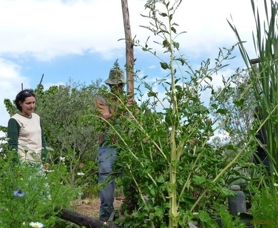 9 /23 - Le jardin potager de l\'association Terre & Humanisme