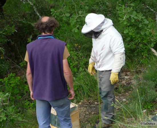 13 /17 - Terre et humanisme, les abeilles essaiment