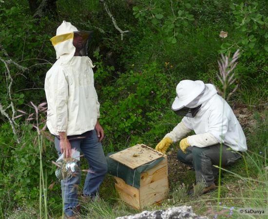 2 /17 - Terre et humanisme, les abeilles essaiment