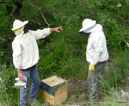 3 /17 - Terre et humanisme, les abeilles essaiment