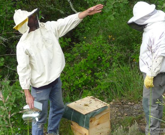 4 /17 - Terre et humanisme, les abeilles essaiment
