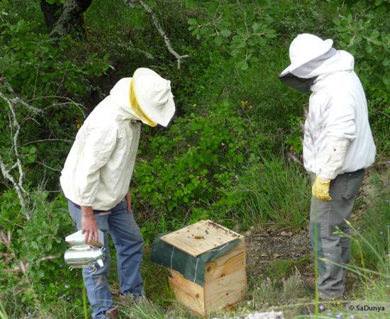 5 /17 - Terre et humanisme, les abeilles essaiment