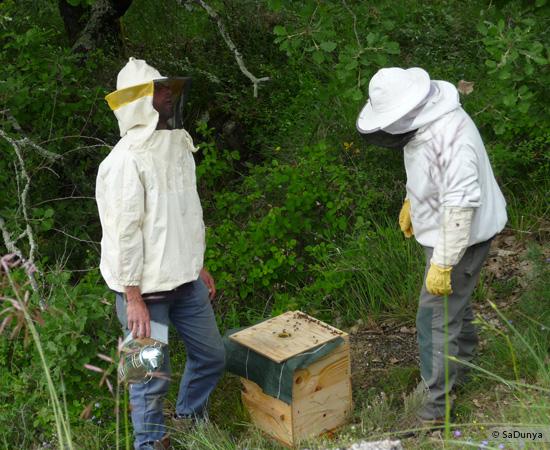 6 /17 - Terre et humanisme, les abeilles essaiment