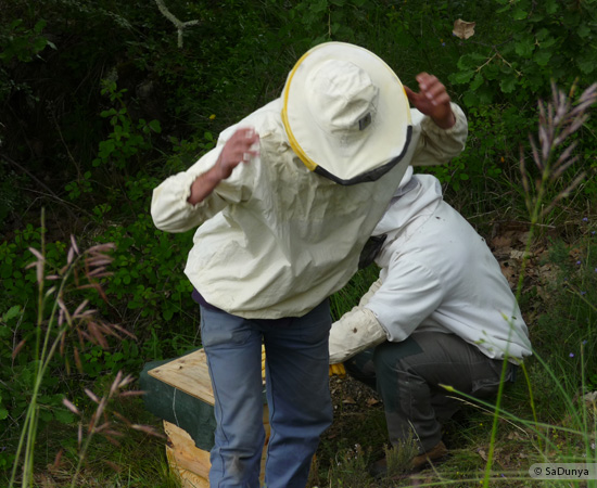 7 /17 - Terre et humanisme, les abeilles essaiment