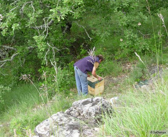 9 /17 - Terre et humanisme, les abeilles essaiment