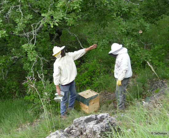 5 /15 - Jean-Philippe Piret avec les abeilles